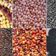 oil_seed