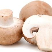 Mushroom640-1
